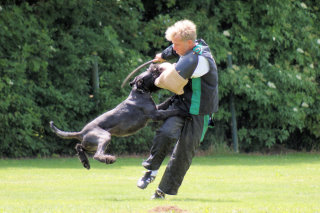Permalink auf:Erfolge von Elberfeld-Hunden